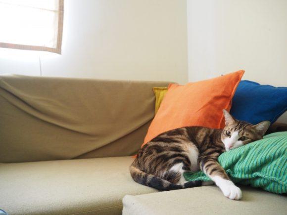 ソファの上で寛ぐネコ・イメージ
