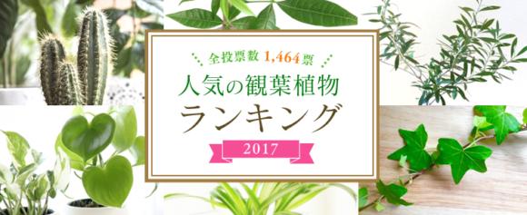 アイリスガーデニングドットコム・人気の観葉植物ランキング2017