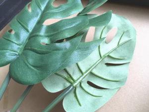 Tuinie Monstera Deliciosaのモンテスラの葉